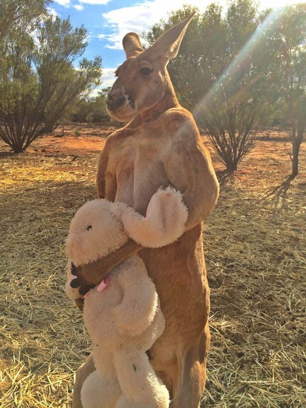 PAY-Roger-the-kangaroo1