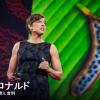 【TED】パメラ・ロナルド:実際の遺伝子組み換え食料