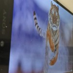 Xperia Z5 Premium、買いか買いじゃないかで海外ユーザーが白熱中。知っておきたいZ5Pの○×ポイント