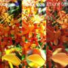 Xperia Z5 / Galaxy S7 / iPhone 6S / シャオミMi5 / LUMIA1020で同じものを撮った写真の比較