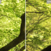 Xperia XとiPhone 6sで同じものを撮影した比較写真4種類