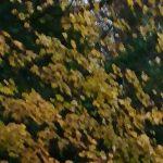 「Xperia XZの写真不具合・画質の悪さ」としてあげられている写真サンプルの例