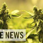 アメリカ・コロラド州では大麻合法化により、2016年には年間220億円の税収がもたらされた